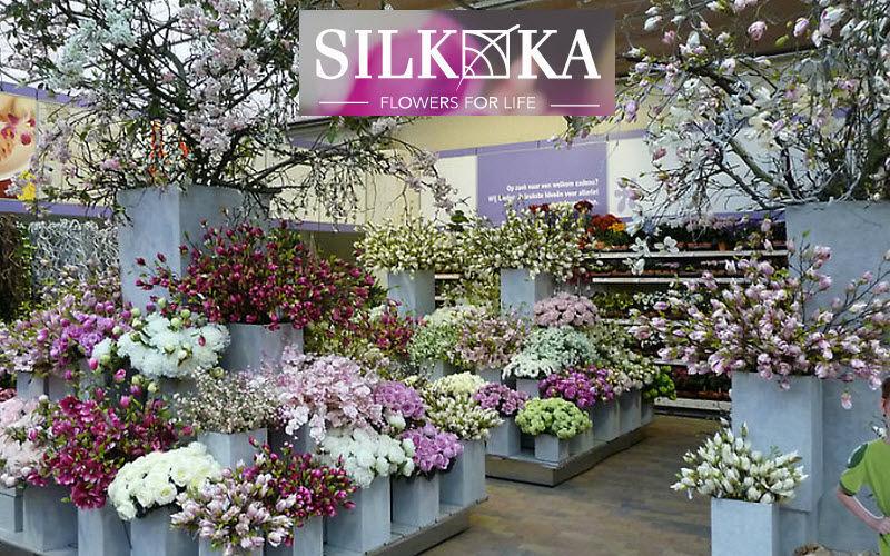 Silk-Ka     |