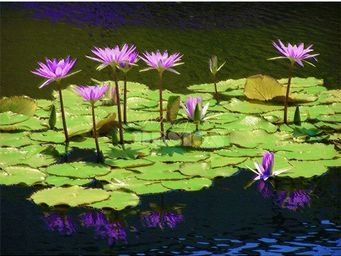 Magel'design - lilly flowers 120x80 cm , 3d effet relief - Tableau Contemporain