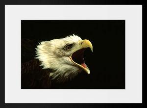 PHOTOBAY - le cri - Photographie