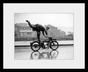 PHOTOBAY - balance - Photographie