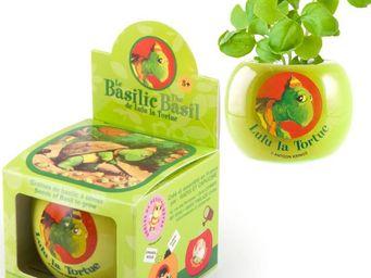 Radis Et Capucine - lulu la tortue et ses graines de basilic en pot c - Potager D'intérieur