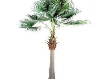 Deco Factory - grand palmier artificiel eventail - Arbre Artificiel