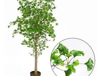 Deco Factory - ginkgo artificiel oslo en pot 190 cm - Arbre Artificiel