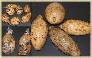 Black Image Natureworld - baobab - Fruit Séché
