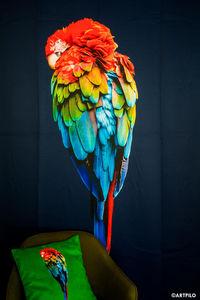 ARTPILO - red parrot - Rideaux Sur Mesure