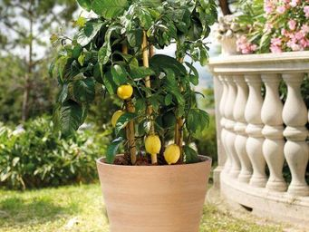DEROMA France -  - Pot De Jardin
