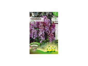 LES DOIGTS VERTS - bulbe corydalis solida x5 - Bulbes De Fleurs