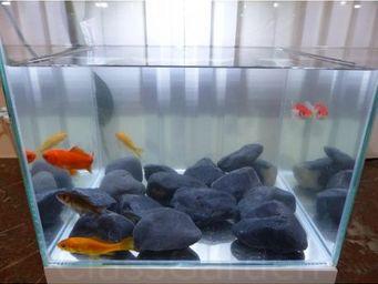 CLASSGARDEN - galet noir aquarium 40-60 mm - Aquarium