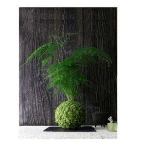 AQUAPHYTE - bassin du congo ni - Composition Florale