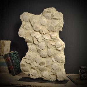 Objet de Curiosite - plaque de scutella - Fossile