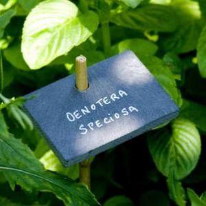 Botanique Editions -  - Etiquette De Jardin