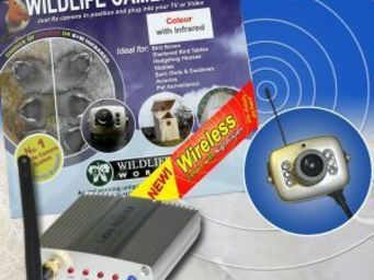 Wildlife world - wireless colour camera kit - Oiseau