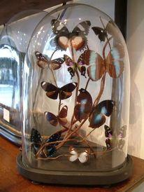 globes de verre avec papillonsglobe de verre ghislain. Black Bedroom Furniture Sets. Home Design Ideas