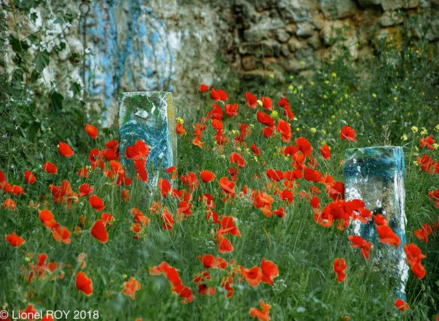 LIONEL ROY - Photographie-LIONEL ROY-..;overlap...
