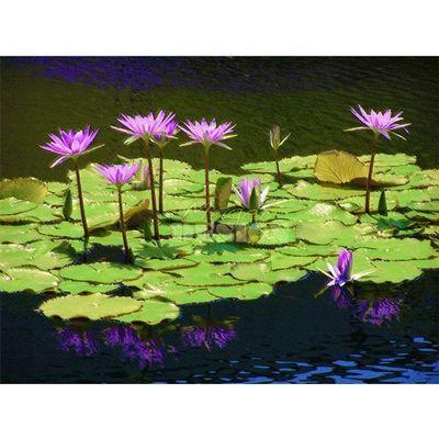 Magel'design - Tableau contemporain-Magel'design-Lilly flowers 120x80 cm , 3D effet relief