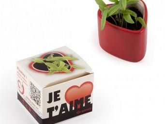 Radis Et Capucine - petit cadeau à faire pousser pour pimenter la sain - Interior Garden