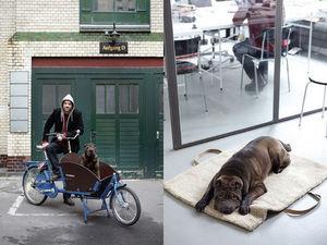 CLOUD 7 -  - Dog Bed