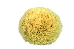 Croll & Denecke -  - Sponge