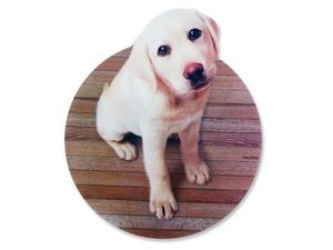 WHITE LABEL - tapis informatique chiot labrador tapis de souris  - Mouse Pad