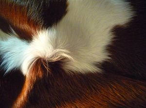 SAN TELMO DESIGN -  - Animal Skin Rug