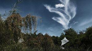 ZEUXIS -  - Photography