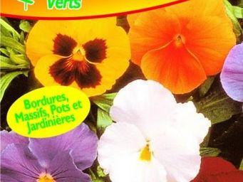 LES DOIGTS VERTS - semence pensée géante suisse variée - Seed