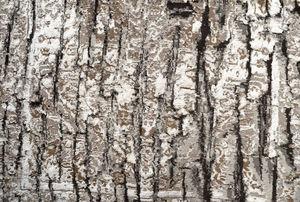 NOBLE NATURAL -  - Modern Rug