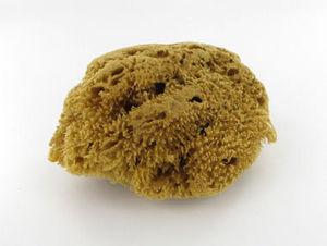 VALMOUR - eponge naturelle de mer - Cleaning Sponge