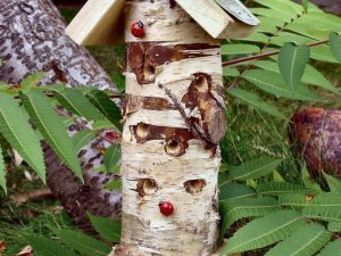 Wildlife world - ladybird/insect tower, complete with pole - Insect
