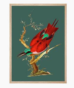 PARADISIO IMAGINARIUM - cardinal - Art Print