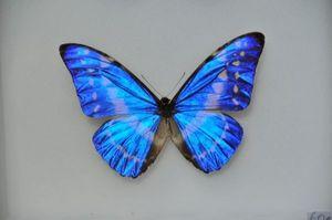 Design Et Nature Schmetterling