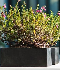 amei -  - Blumenkasten
