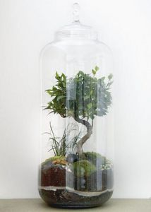 GREEN FACTORY - giant lab | bonsaï (8 ans) - Terrarium Garten Unter Der Glocke