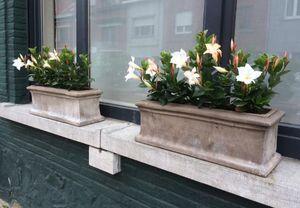 TERRACOTTA D'ARTE -  - Blumenkasten