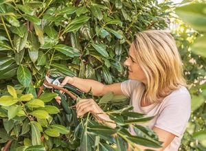 Bosch Outillage - easyprune - Gartenschere