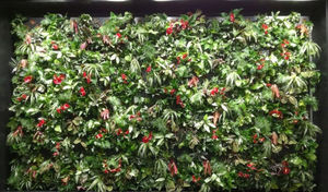 ORTISGREEN -  - Bepflanzte Wand