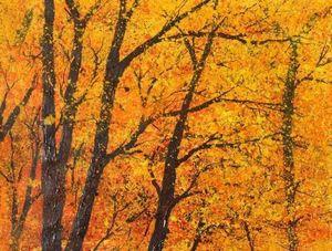 Buckingham Fine Art - autumn paper 7 - Dekobilder