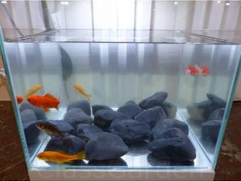 CLASSGARDEN - galet noir aquarium 40-60 mm - Brunnen Aquarium