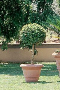 Enzo Zago - classique 1436715 - Garten Blumentopf