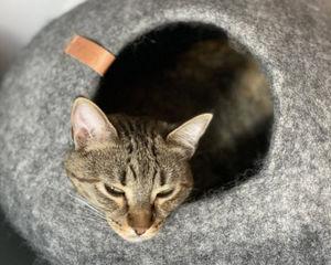 ROTIN ET OSIER - grotte - Katzenkorb