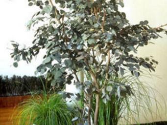 Hortus Verde - arbre & verdure - Stabilisierter Baum