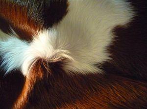 SAN TELMO DESIGN -  - Piel De Animal
