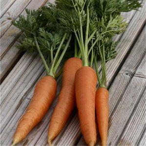 FERME DE SAINTE MARTHE - carotte nantaise tip top ab - Semilla