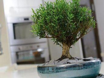 DEROMA France - bonzai - Jardinera De Interior