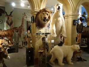 Design Et Nature Animale imbalsamato